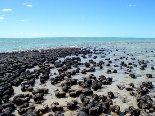 Highlights in Western Australia: Hamelin Pool