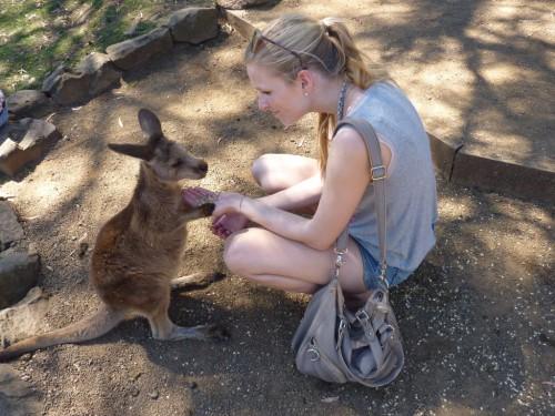 dieses süße Känguru-Baby lebt im Bonorong Wildlife Sanctuary in Tasmanien