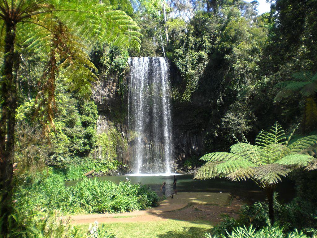 Millaa Millaa Falls Wasserfälle - Sehenswürdigkeiten Australien Ostküste – Reiseroute Australien Ostküste im Überblick