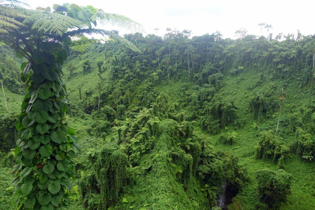Samoa-Reisebericht: satt-grüne Landschaft rund um den Wasserfall Fuipisia - eine tolle Sehenswürdigkeit in Samoa