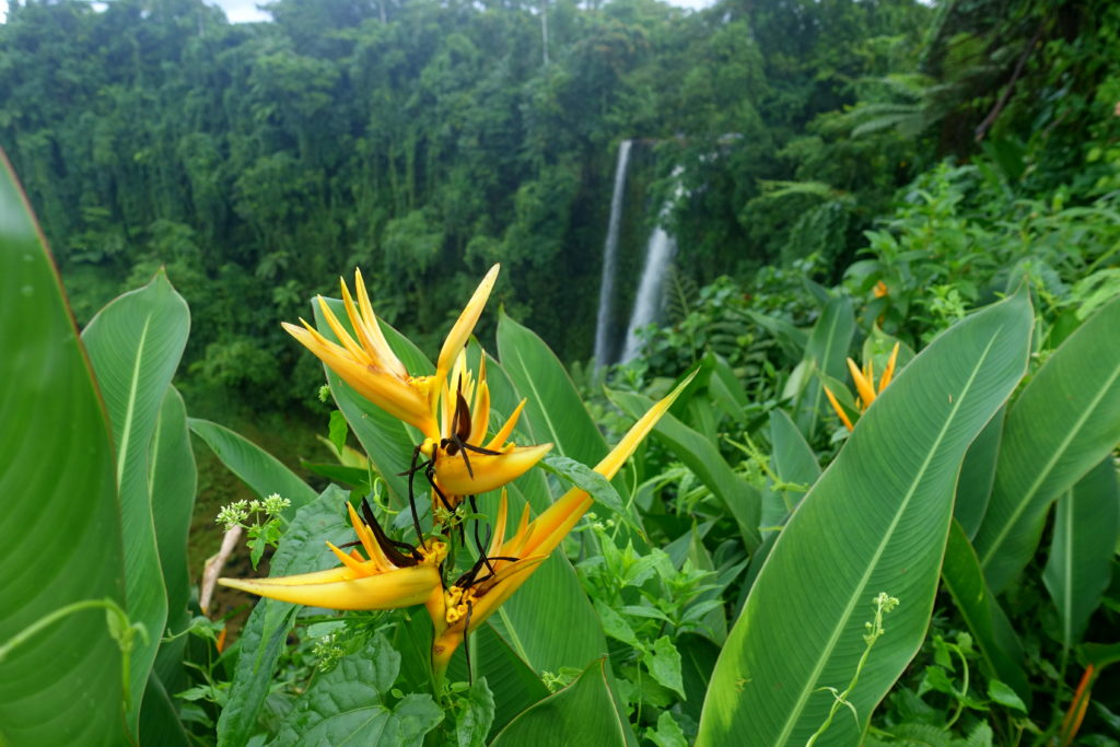 Blumen-Garten am Fuipisia-Wasserfall - Samoa-Sehenswürdigkeit