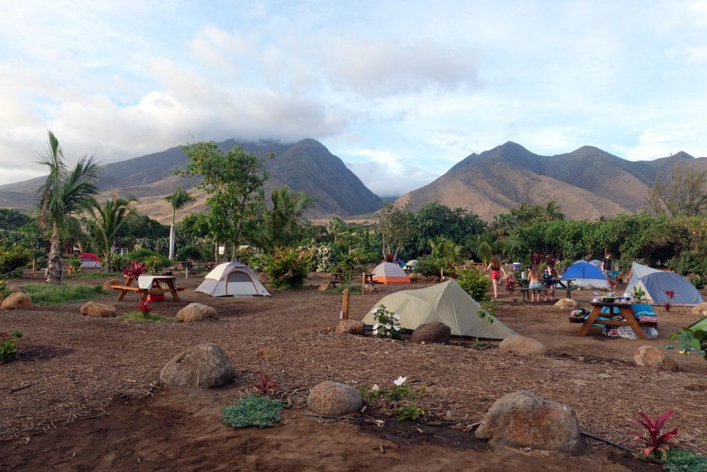 Camping auf Maui auf Hawaii - hier auf dem privaten Campingplatz im Camp Olowalu auf Maui mit vielen Zelten direkt am Meer und Auto-Camping