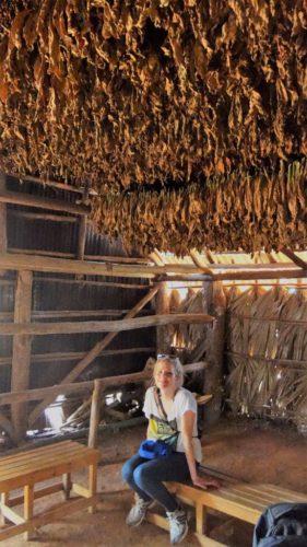 Einfach wunderschön - das Tal Viñales mit seinen unzähligen Tabakplantagen
