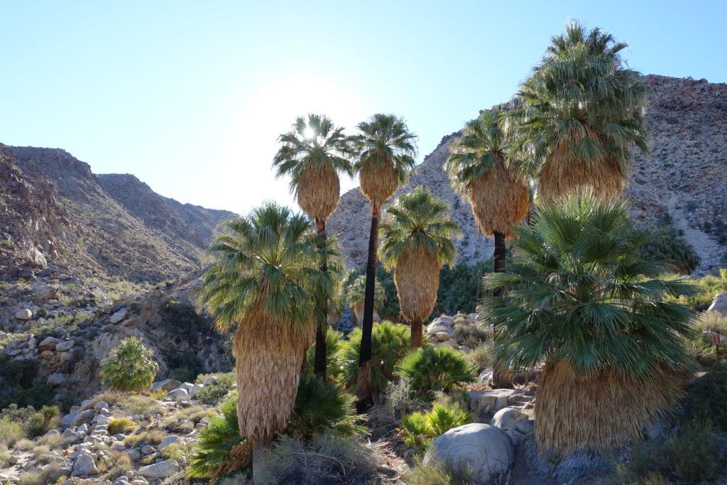 Kalifornien-Reiseroute: Joshua Tree Nationalpark