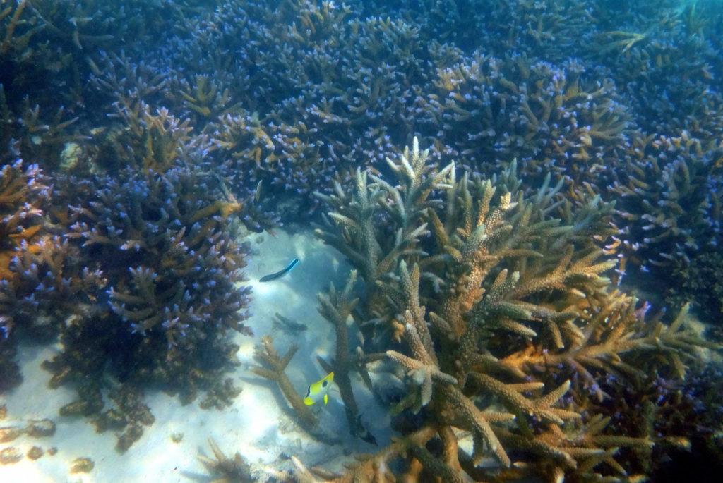 Schnorcheln am Matareva Strand in Samoa: Korallen & Fische im Naturschutzgebiet - Samoa-Sehenswürdigkeit