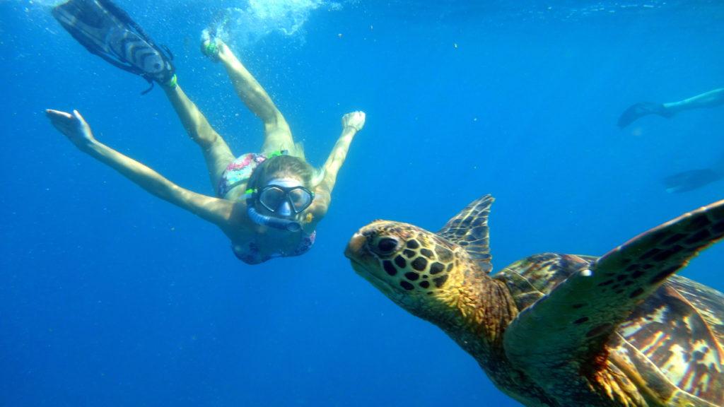 Savaii-Highlights: Schnorcheln auf Savai'i mit einer wilden Schildkröte - Backpacking in der Südsee