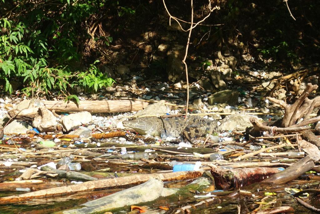Müllproblem in Mexiko: ein Krokodil in einem Fluss voller Müll im Sumidero Canyon Nationalpark in Chiapas in Mexiko - Reiseinfos und Tipps für Chiapas