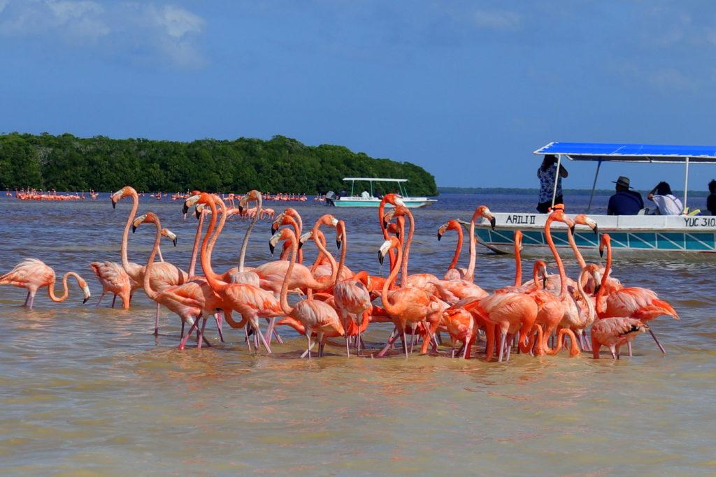 Flamingos in Celestún, Mexiko - Reisebericht über unsere Rundreise auf der Halbinsel Yucatán inklusive Campeche und Quintana Roo. Speziell für Backpacker in Mexiko und Rundreisen im Yucatán.