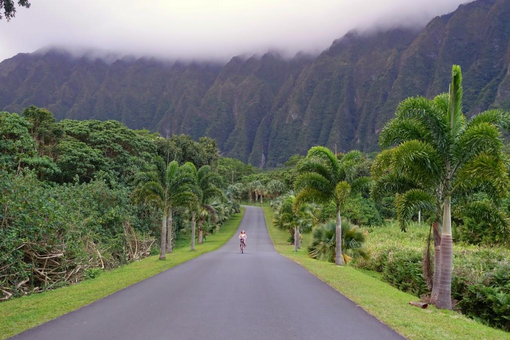 Wunderschöne Radtour auf Hawaii: der Botanische Garten auf Oahu mit seinen vielen Palmen und Bergpanorama