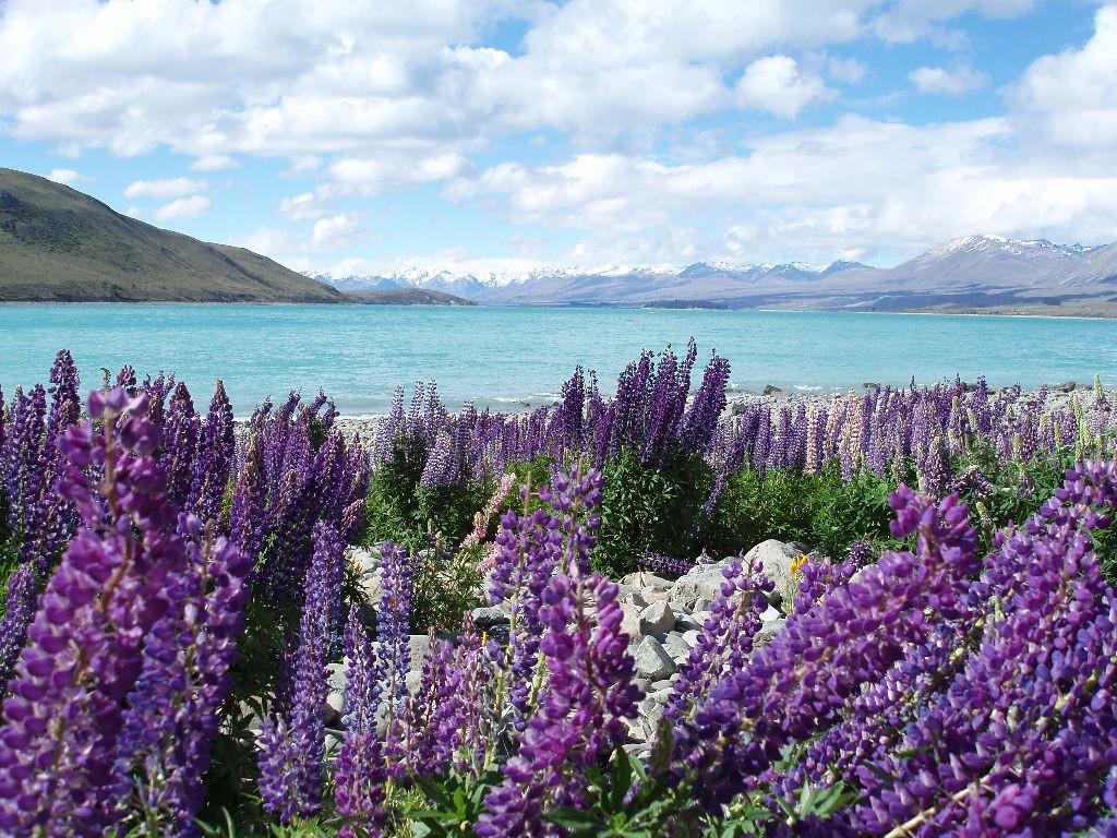 Ozeanien_Neuseeland_Lake Tekapo_Work Travel Balance