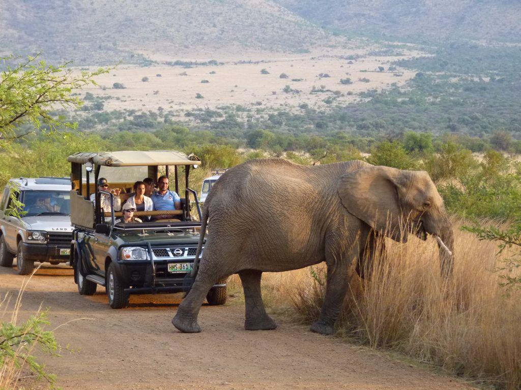 Elefant auf unserer Safari im Pilanesberg Nationalpark