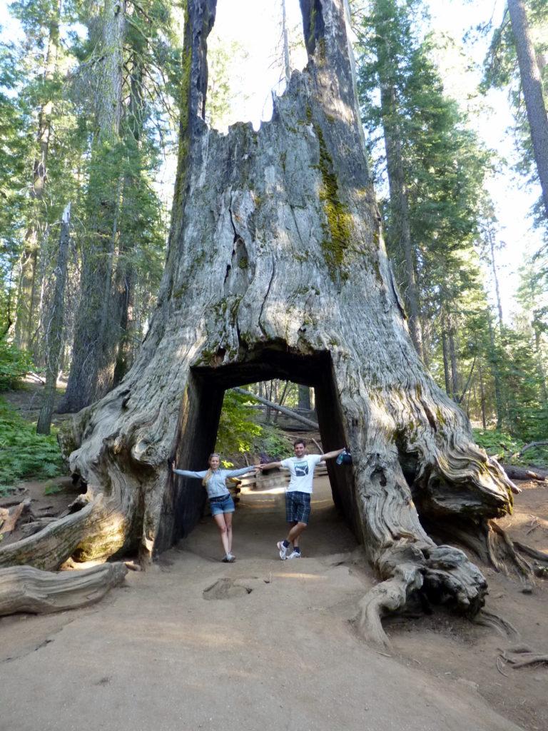 Mammutbaum auf deiner Rundreise in Kalifornien