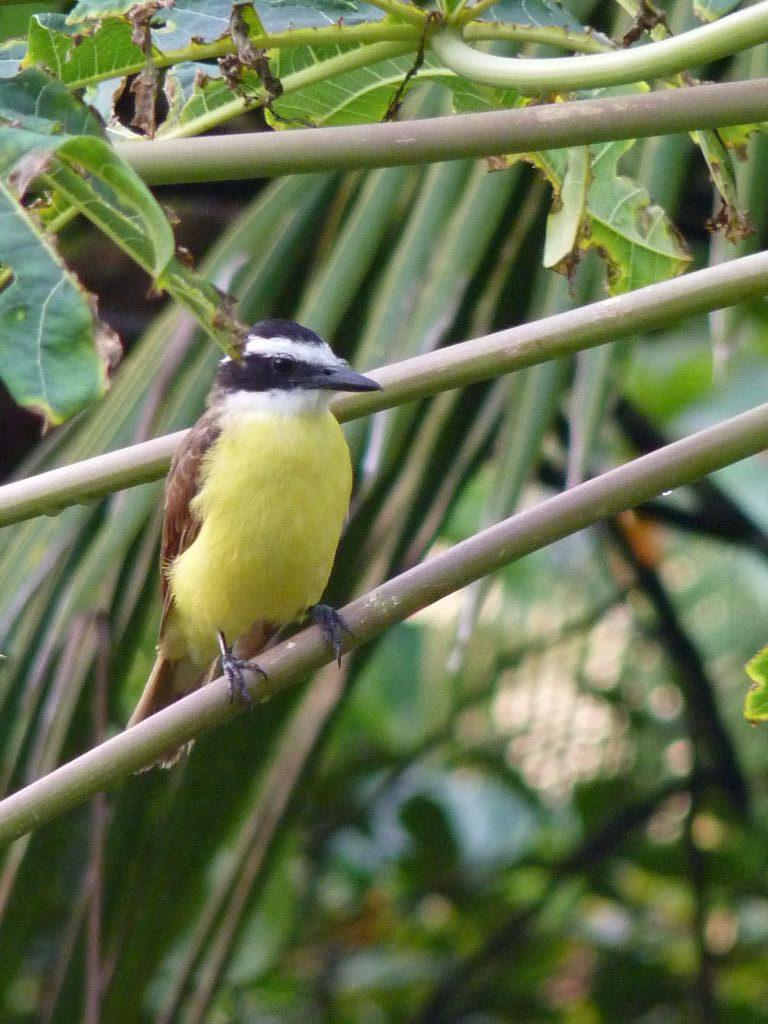 Die Vogelwelt gehört zu den Highlights in Costa Rica