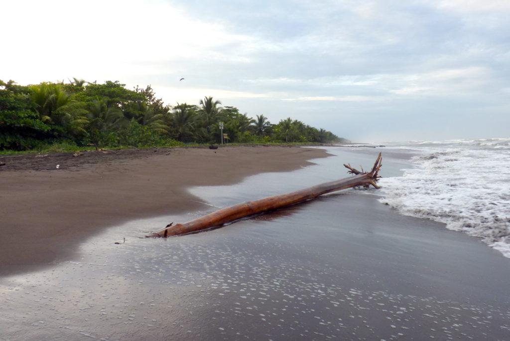 Strand von Tortuguero - Panama & Costa Rica in 3 Wochen - Reisebericht über Backpacking in Panama und Costa Rica