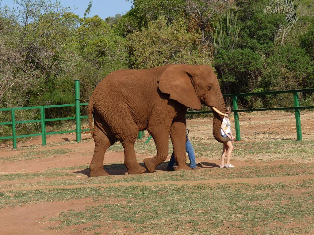 Spaziergang mit Elefanten im Elephant Sanctuary nahe Johannesburg - Sehenswürdigkeiten in Johannesburg