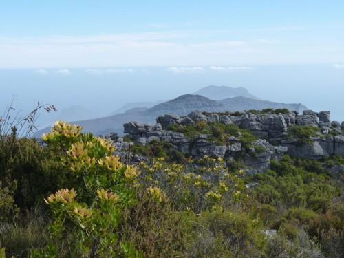 Reisebericht Südafrika - Kapstadt - Tafelberg besteigen