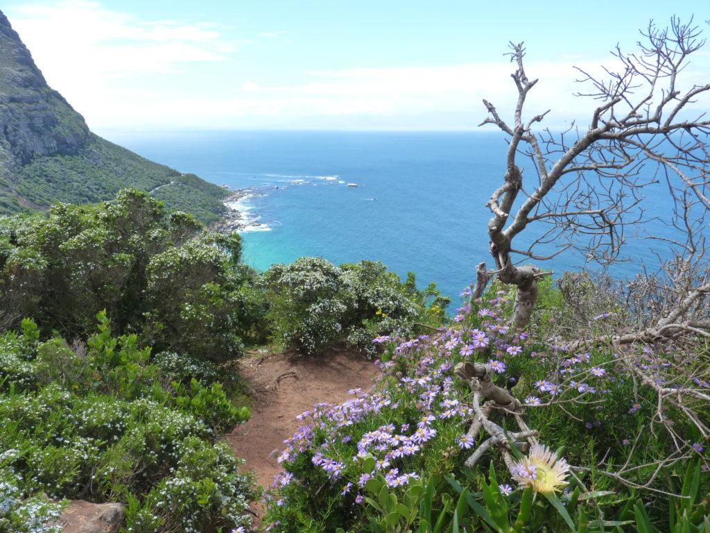 Bunte Blumen und das Meer im Hintergrund: Kap der guten Hoffnung Nationalpark auf deiner Südafrika-Reiseroute