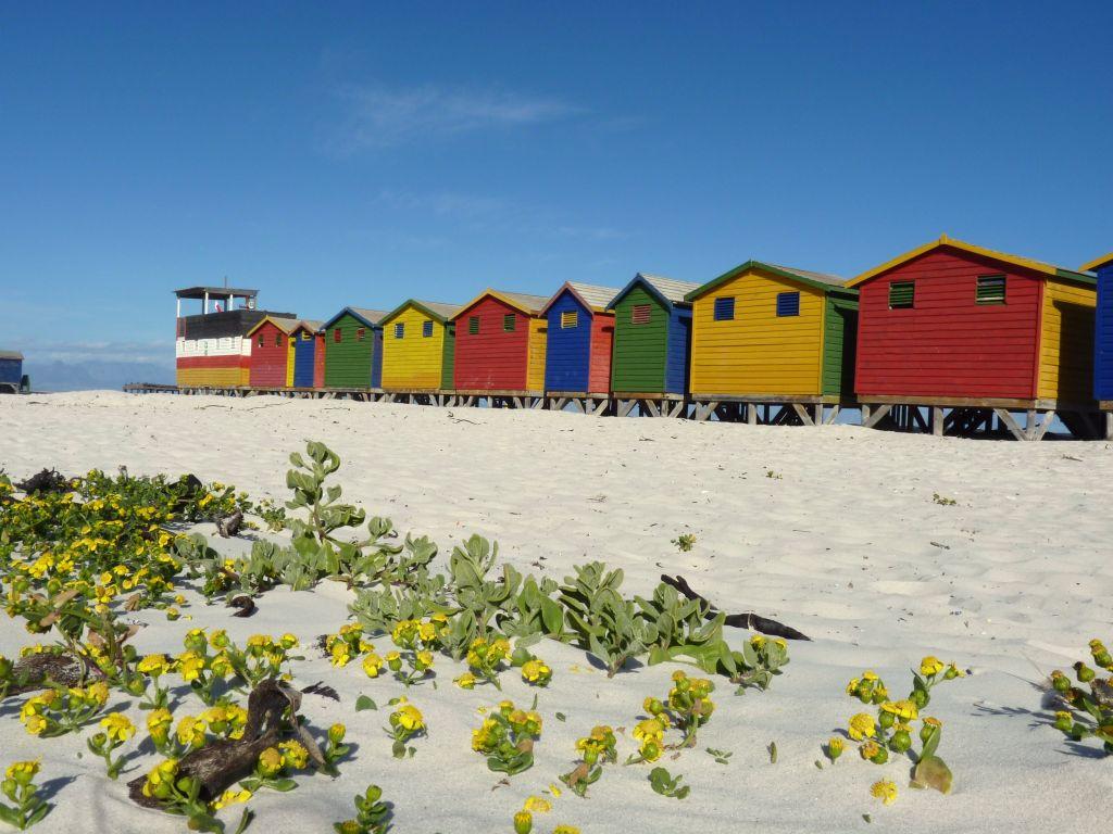 Kapstadt Reise: am Muizenberg Strand gibt es wunderschöne bunte Standhäuschen
