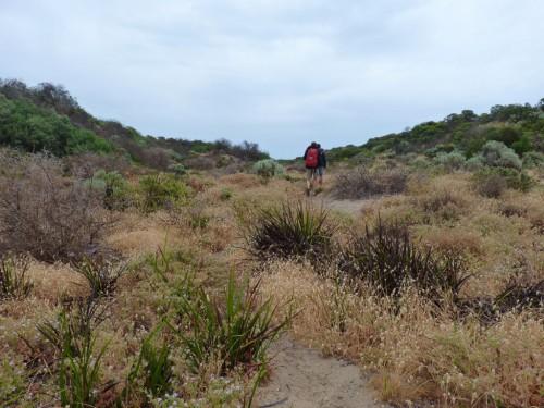 Dünenlandschaft im Coorong Nationalpark auf unserem Australien-Roadtrip