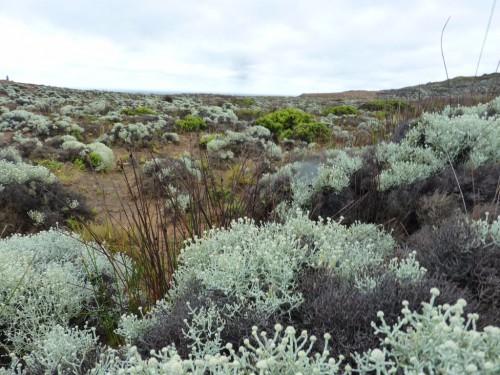 Heidelandschaft am schönen Cape Bridgewater