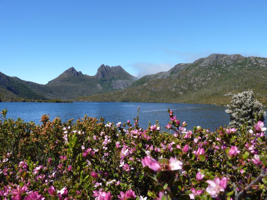 Blumen und Berge im Cradle Mountain Nationalpark Freilebende Pinguine in Burnie