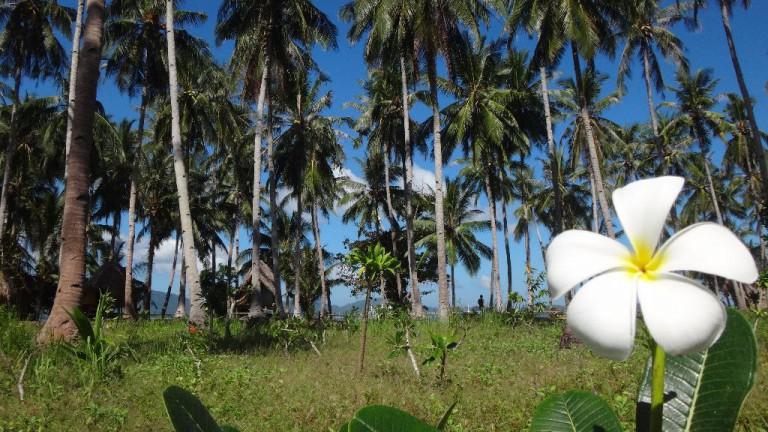 Philippinen-Reisebericht