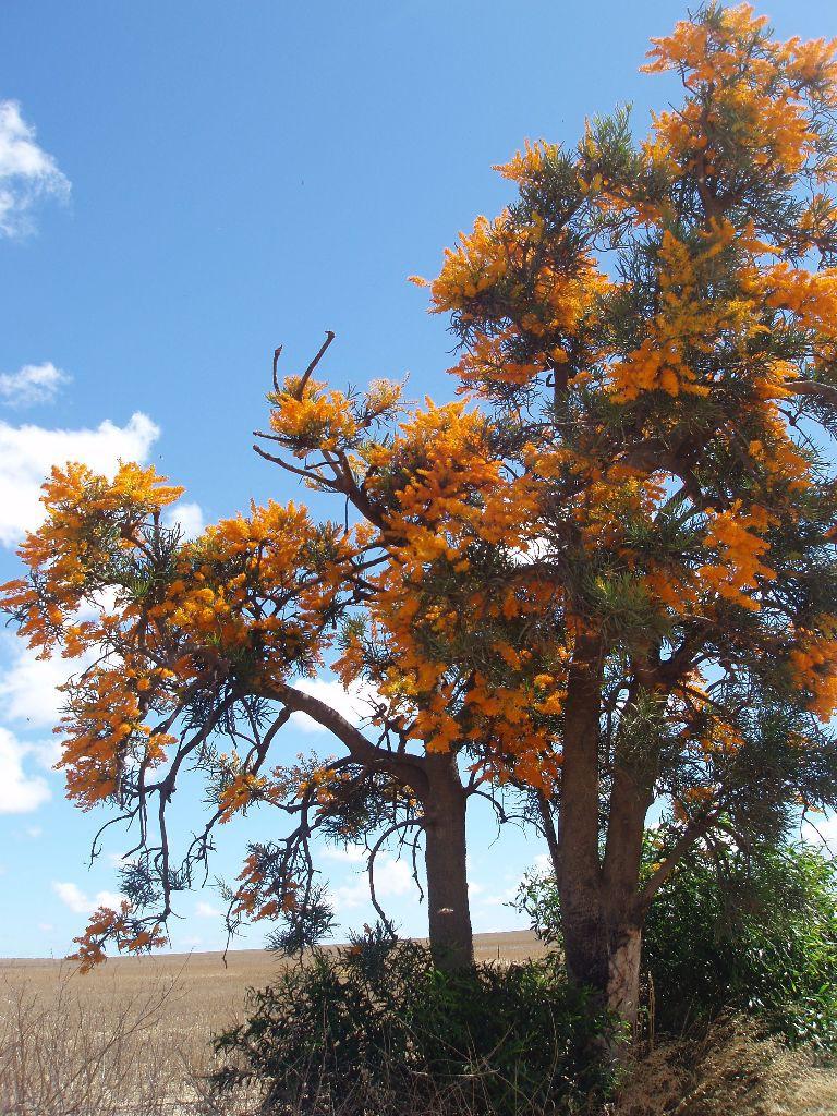 Principalit yof Hutt River_Reisebericht_Land in Australien_Western Australia_Work Travel Balance