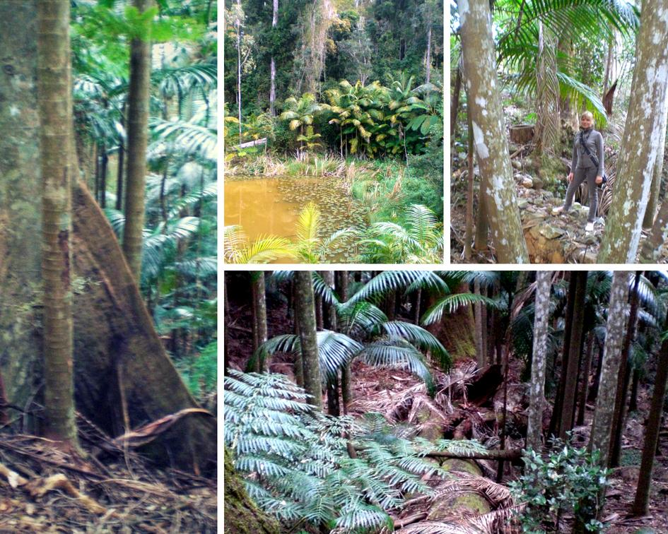 Regenwald in Australien an der Ostküste - Highlights Ostküste Australien